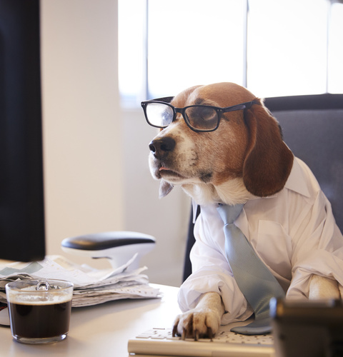 Beagle Dressed As Businessman Watching Computer